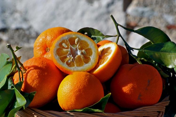 arance-amare_01