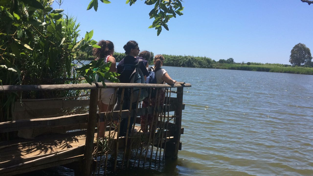 Parco Ausoni: Elevata presenza uccelli acquatici al Laghetto degli Alfieri diFondi