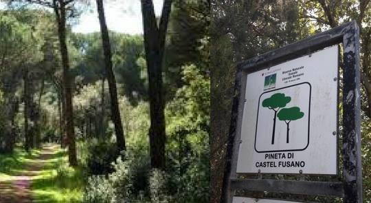 Associazione Pontieri del Dialogo: Escursione alla Pineta di Castel FUSANO e di Castel PORZIANO, domenica 26 agosto2018
