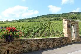 vigne di borgogna