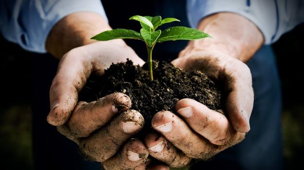 AGRICOLTURA, ONORATI: DUE NUOVI BANDI DEL PROGRAMMA DI SVILUPPO RURALE PER BIOLOGICO E ZONEMONTANE