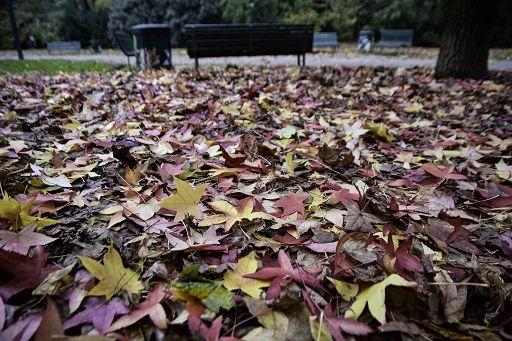 Ingv e Arpa, foglie e licheni per monitoraggio qualità dell`aria Hanno proprietàmagnetiche