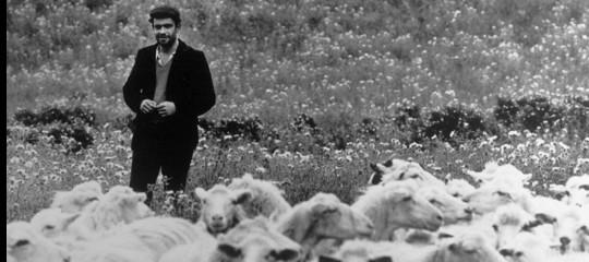 Latte: pastori contro 'Piano offerta pecorino', pronti aprotesta