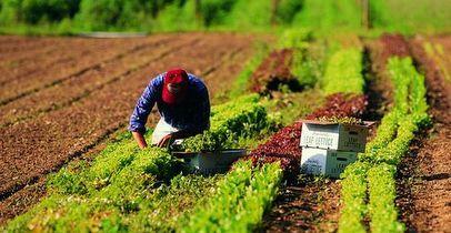 AGRICOLTURA. CARETTA (FDI): BELLANOVA ASCOLTI LAVORATORI E IMPRESE PRESENTANDO SOLUZIONICERTE