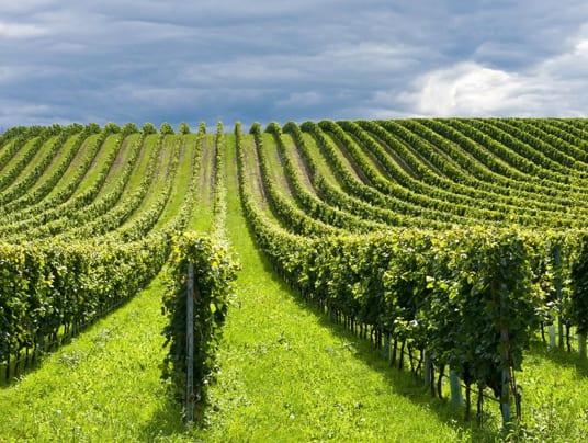 AGRICOLTURA. BELLANOVA: AVANTI SU AGRITURISMO, AGRIASILI E AGRINIDI PROSEGUIRE SULLA STRADA DELLA MULTIFUNZIONALITÀ DELLEIMPRESE