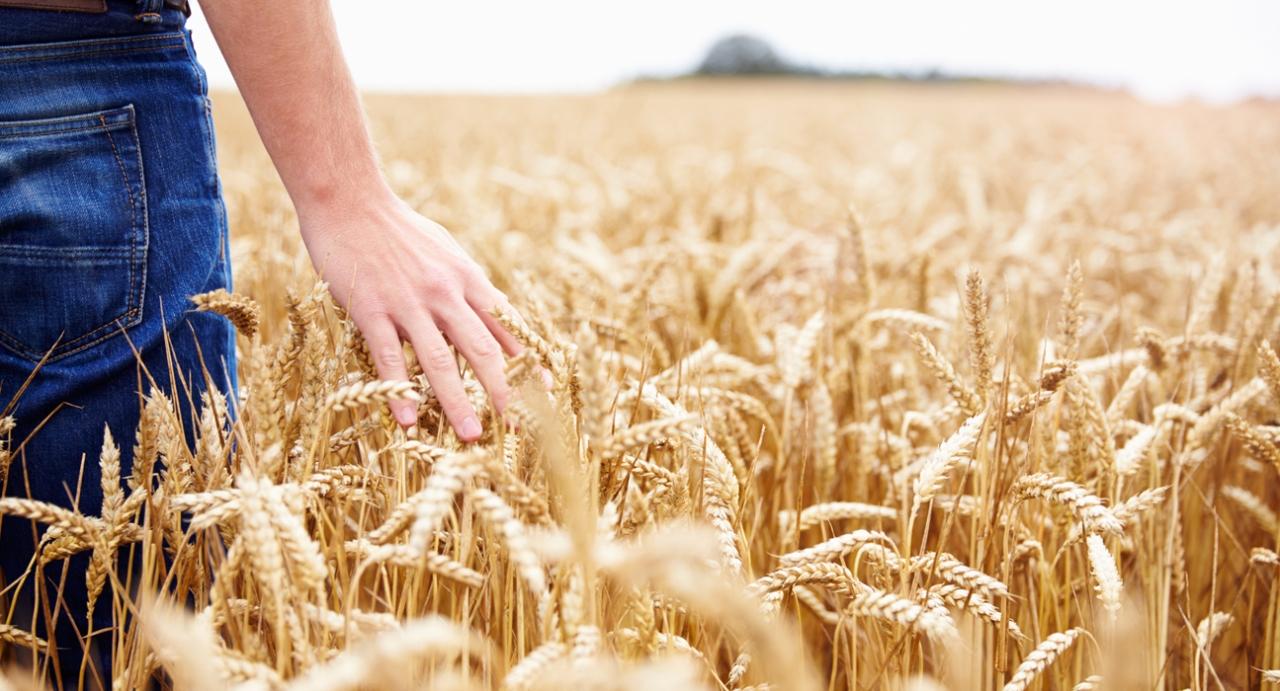 AGRICOLTURA: ONORATI, 6 MLN DEL PSR LAZIO OBIETTIVI AGRO-CLIMATICO-AMBIENTALI