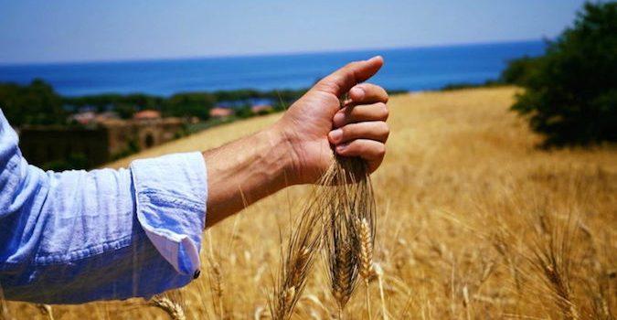 DAZI. MARTINA: UE ATTIVI AIUTI SPECIALI AI PRODUTTORI AGRICOLICOLPITI