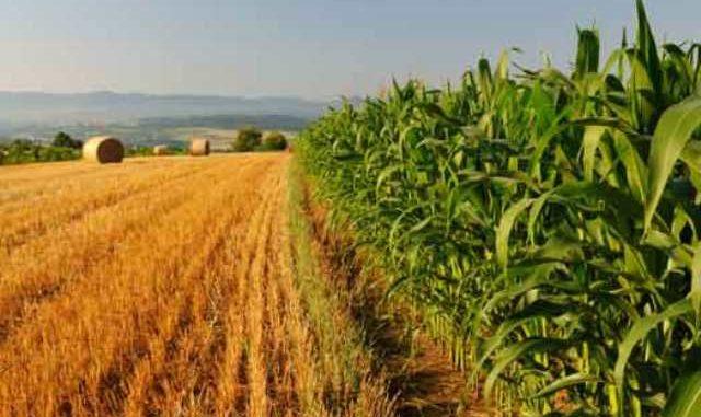 CORONAVIRUS. BATTISTONI: CRISI MANODOPERA SENZA PRECEDENTI IN AGRICOLTURA 'A RISCHIO FRUTTA EORTAGGI'