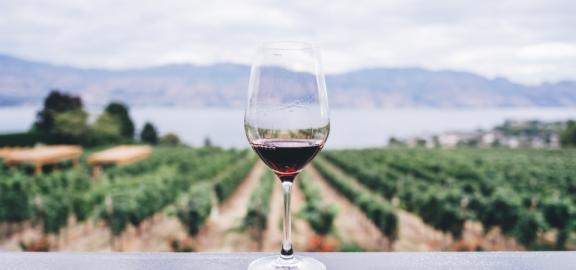 vino-960x450.png