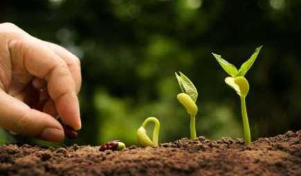 agevolazioni-agricoltura-2020-bonus-novita-legge-di-bilancio-decreto-fiscale-aiuti