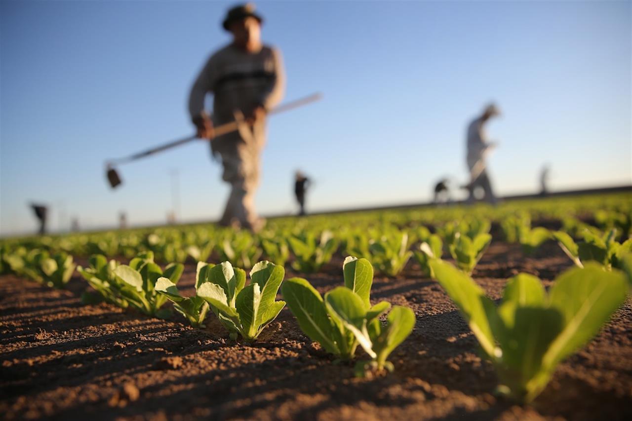 AGRICOLTURA. COLDIRETTI: -7,3% VERDURA, ÈDEFLAZIONE