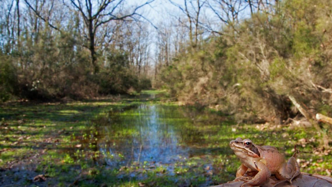 Lazio pro natura: il tesoro della zone umidepontine
