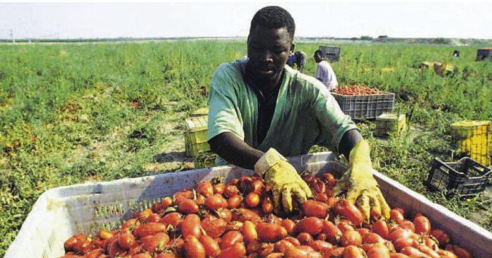 Agricoltura: Bellanova, non saro' mai complice deicaporali