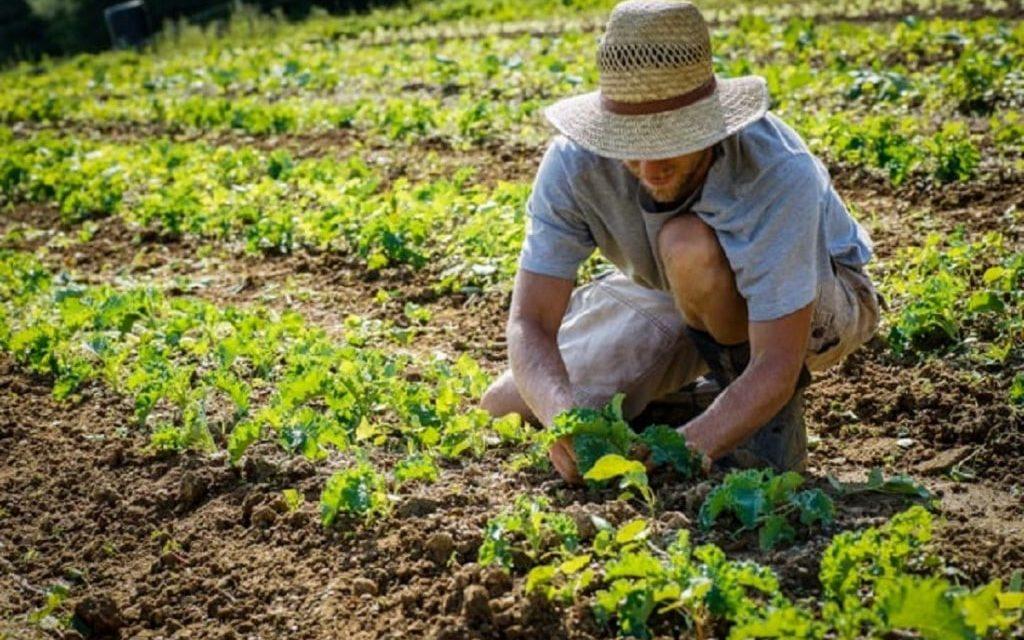 AGRICOLTURA, REGIONE LAZIO: FIRMATA L'ORDINANZA PER SPOSTAMENTI AGRICOLTORIHOBBISTI