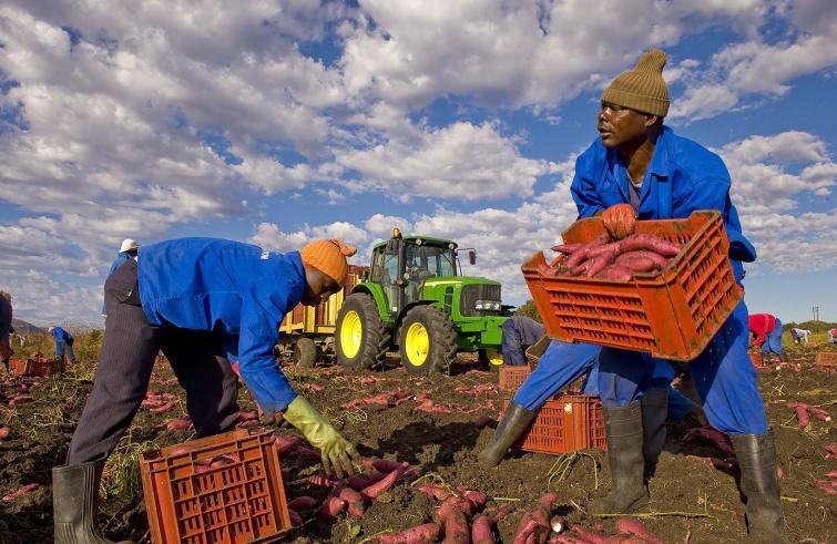 Migranti: Bellanova,per lavoratori agricoli permessi per 6 mesi