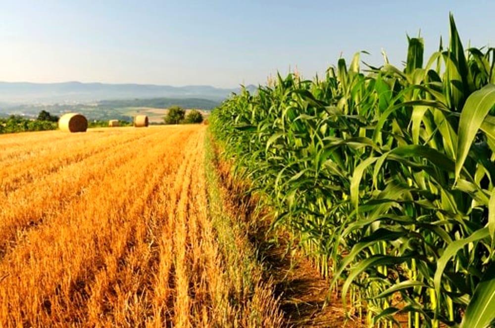 Stati Generali: Coldiretti, da agricoltura 200mila postilavoro